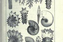Sea lovers. / Deep Blue, aquatic world, sea monsters.