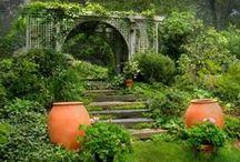 Gardens / by Lauren Berrizbeitia