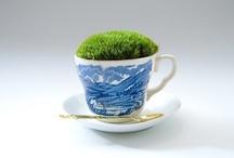plants / by dileodile