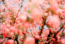 We love flowers! / Sí, nos encantan las flores!
