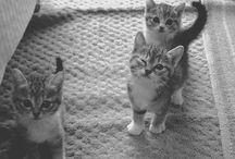 ♡ // PUPPIES // KITTIES // CUTE ANIMALS // ♡ / Puppies!!!!