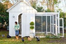 dream chicken coop (hehe)