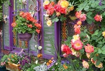 Gardening / by Karen Campbell