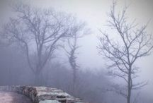Foggy Mystique / I love the quiet of a foggy day. / by Cherokee Haab