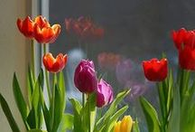 Learning With Spring Ideas / All things Spring!