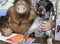 СОБАКИ  (DOGS ) И ДР.