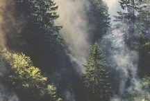 Nature / Photographies de la nature : forêts, montagnes, fjords...