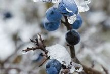 Hiver / Photographie sur le thème de l'hiver : feu de cheminée, neige, bûches...