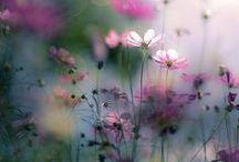 Printemps / Photographies sur le thème du printemps : fleurs, champs, arbres, animaux...