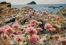 Eté / Photographie sur le thème de l'été : fleurs, paysages...