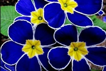 Blues Hues! / Blues of all colors, on anything! / by Lissa Pins