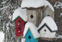 Birdhouses / Bird feeders, birdhouse & birds / by Lissa Pins