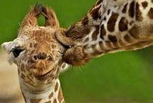 Animal Kingdom / cute and funny / by Pilar Gonzalez