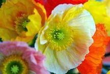 Gorgeous Flowers / by Jeanne Hening