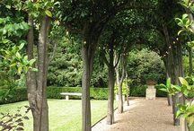 Through the garden gate / by Janice Rivera-Klein