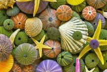 Shells...nature's jewels / by Jeanne Hening