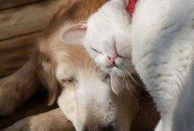 Animais amigos