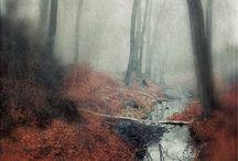 autumn's grey solace