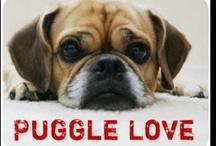 I LOVE PUGGLES!!!!!