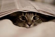 Kitties / by Roxanne Haslem