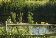 Romantic Getaway Gardens / Come and stroll our grounds and enjoy the lush green New England perennial gardens!