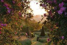 Garden / by Lena Willmschen