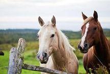 heartland & horses...