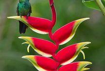 .❥ Rainforest / Floresta Tropical / Rainforest animals, plants and landscapes. Animais, plantas e paisagens da floresta, enfatizando matas brasileiras e  Mata Atlântica.
