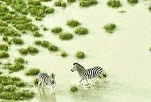 Botswana Reisen / Die einzigartige Natur und die faszinierende Tierwelt machen jede Botswana Reise zu einem unvergesslichen und einmaligen Erlebnis! Ob du diese einzigartige Atmosphäre in Safari Lodges genießen möchtest oder lieber in einfachen, komfortablen Zeltcamps übernachtest - unsere Botswana Reisen bieten dir alles, was du von einer Afrika Reise erwartest!