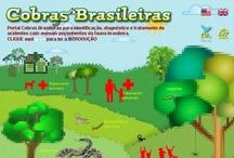 Projeto COBRAS BRASILEIRAS / O Projeto COBRAS BRASILEIRAS será utilizado na identificação rápida e eficiente de cobras e serpentes, bem como fornecerá subsídios para as medidas iniciais quanto ao diagnóstico e tratamento de acidentes por animais peçonhentos da fauna brasileira. #cobras,#animaispeconhentos,#cobrasbrasileiras