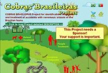 COBRAS BRASILEIRAS Project / COBRAS BRASILEIRAS Project will be used for the rapid and efficient identification of snakes of Brazilian fauna, as well as provide information on the initial steps to the diagnosis and treatment of accidents involving these animals. #cobras, #venomousanimals