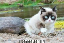 Grumpy cat / I wonder what grumpy cat would be like if he was happy...