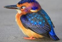 Birds / by Judy Newman