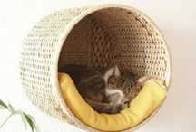 chats / cat  / by Laetitia Delcher