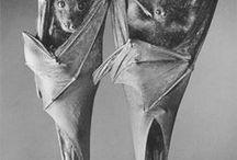 Photos of Bats / Photos of bats of all sorts.