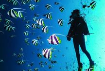 #Scuba-Diving / Water-My World-My Element