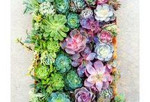 Garden Design / by Molly Peterson