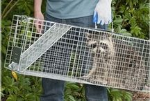Havahart® Live Animal Traps / Remove unwanted critters the most humane way with a Havahart® live animal trap! Havahart® traps are durable, safe for you and wildlife, and proven effective! Check out our pins to see which trap is right for you!
