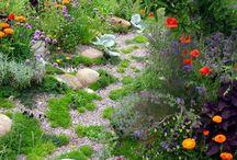 Wild country garden