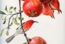 Иллюстрации - ботаника