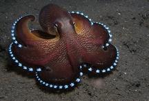 Octopodes / by ThirdNameJane