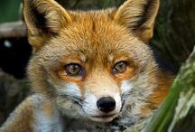 wildlife - really