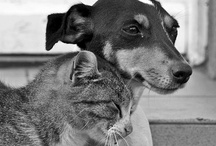 The Ark - Friends Forever / Animal friends. / by Yvonne Rose