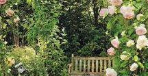 Magic Gardens / Beautiful gardens and fantastical landscape.