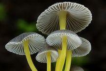 Fungi & Mushrooms