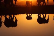 Wild Travel Africa / Great travel adventures and places to visit in Africa! www.susielindau.com
