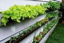 Gardening Ideas / Gardening ideas, Gardening for beginners, Gardening design, Vegetable gardening