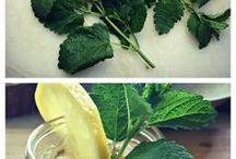 Herb Garden Tips / Herb Gardening Tips, Secrets to a successful Herb Garden, Herb Gardens for beginners, Herb gardening for beginners course