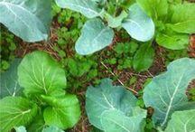 Vegetable Garden Beginners / Vegetable Garden Beginners tips, Gardening Tips, Easy Vegetables To Grow