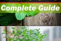 Herb Garden Indoor / Herb Garden Indoor, Indoor Garden, Indoor Garden Ideas, Indoor Herb Garden